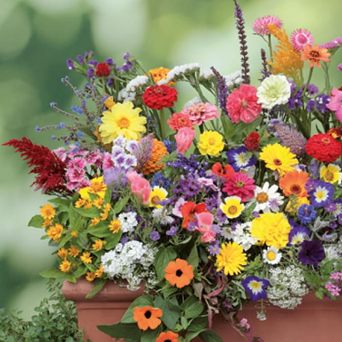 Kwiaty Na Balkon Mix Nasion Kiepenkerl Sklep Dla Ogrodu